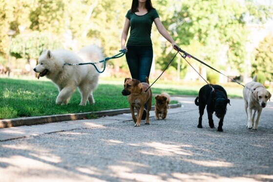 5 Profissões para quem deseja trabalhar com cães