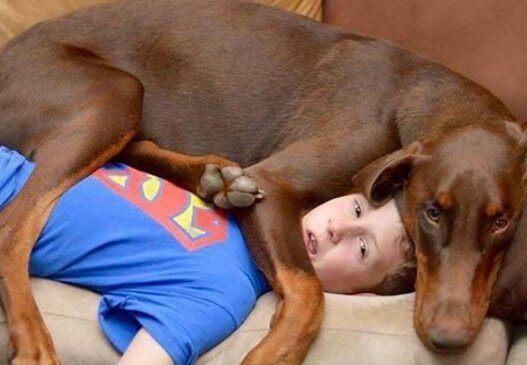Como fazer seu cachorro parar de dormir na sua cama