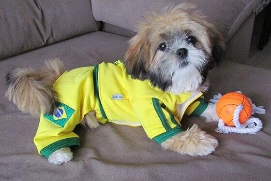 Saiba quais são as 7 raças de cães mais registradas no Brasil