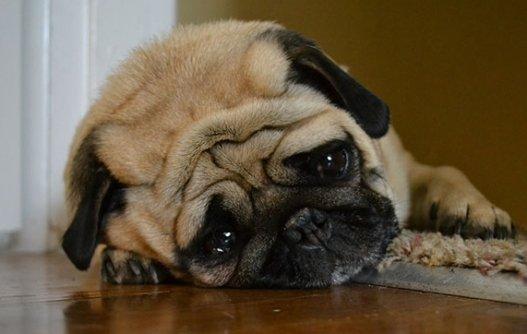 O que fazer quando eu saio de casa e meu cachorro fica triste/agitado?