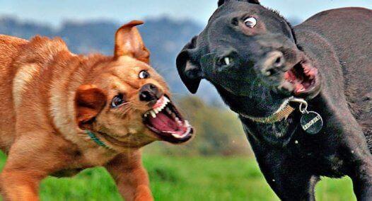 4 maneiras para separar cachorros brigando