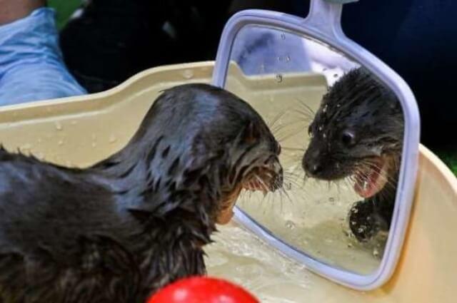 10 animais que descobriram o espelho