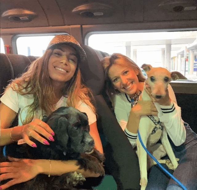anitta adota três cachorros