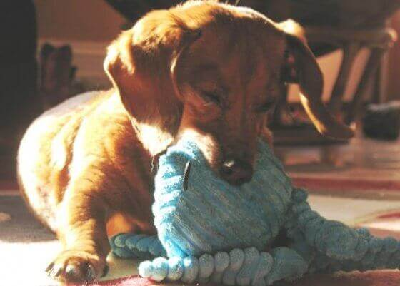 Como fazer brinquedos para cachorro morder sem gastar nada