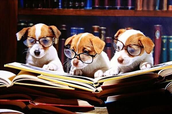 Conheça os 5 melhores livros sobre cães