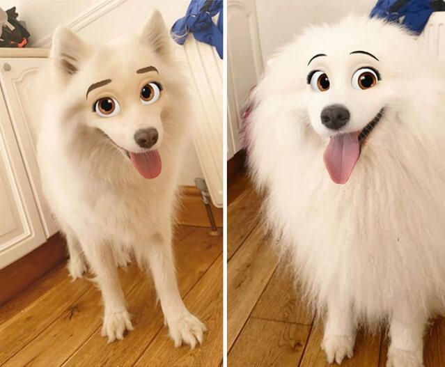 Novo filtro de aplicativo deixa seu cachorro parecendo um personagem da Disney
