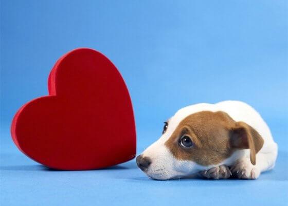 Conheça os 3 melhores sites para encontrar o par perfeito do seu cachorro