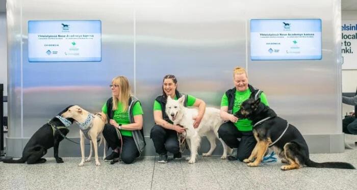 cães detectam covid-19