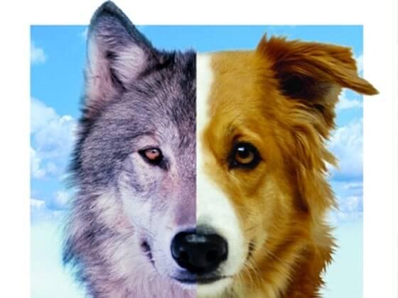 Cães e lobos — entenda mais sobre a evolução do melhor amigo do homem