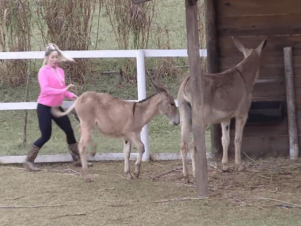 carol narizinho enfrenta dificuldades para alimentar animais