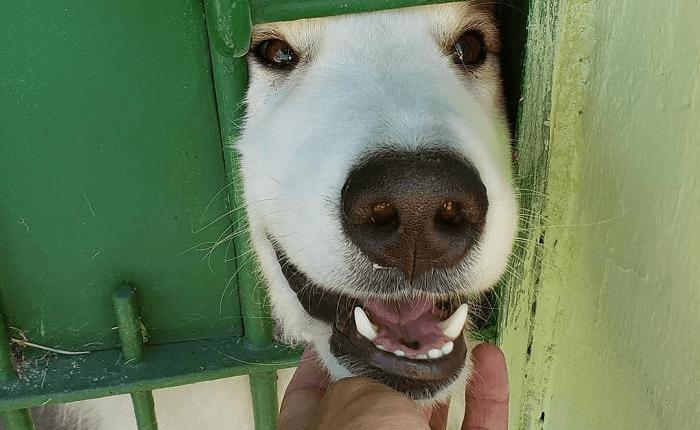 carteiro dando carinho em cachorro