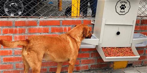 comedouro de rua para cães