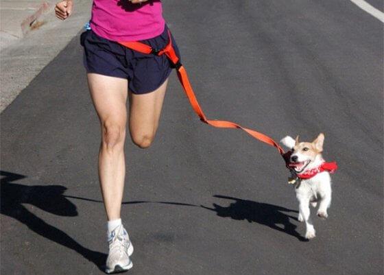 Saiba como correr do jeito certo com seu cachorro