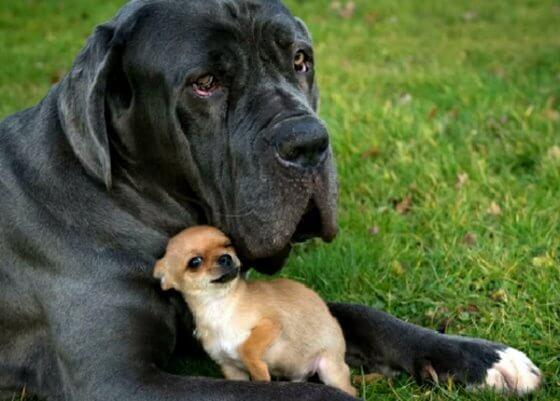 Como encontrar o irmão perfeito para o seu cachorro