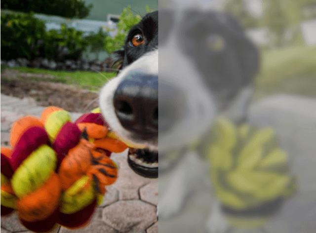 Como os cães enxergam?