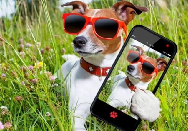 Como tirar as melhores fotos do seu cachorro
