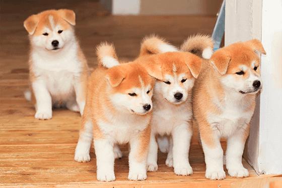 4 sites para comprar um cachorro de raça