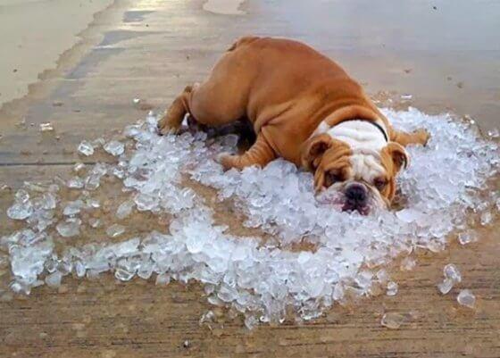 Como refrescar seu cachorro em dias quentes