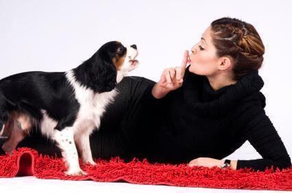 3 Dicas simples para o seu cachorro entender tudo que você fala