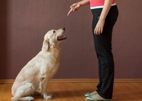 Como ensinar ao seu cachorro de maneira fácil o comando: Senta!