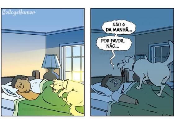 Expectativa vs Realidade em ter um cachorro