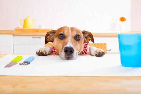 7 Alimentos que você pode compartilhar com seu cachorro