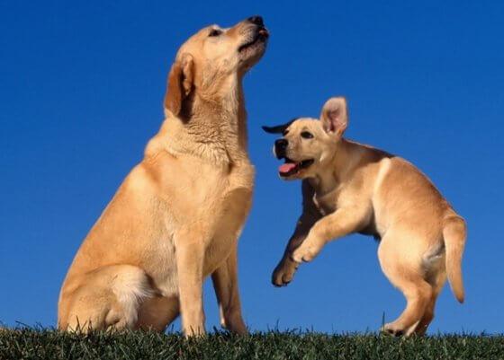 Entenda facilmente as 5 principais fases de vida de um cachorro