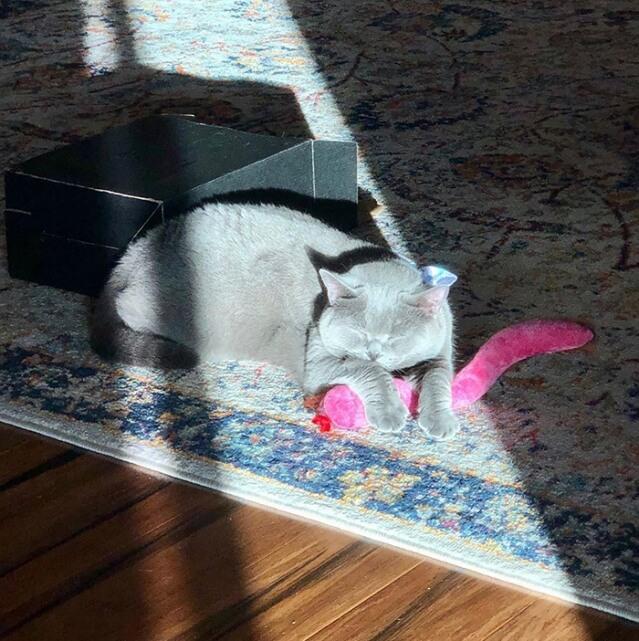 10 Animais de estimação desfrutando de um bom banho de sol
