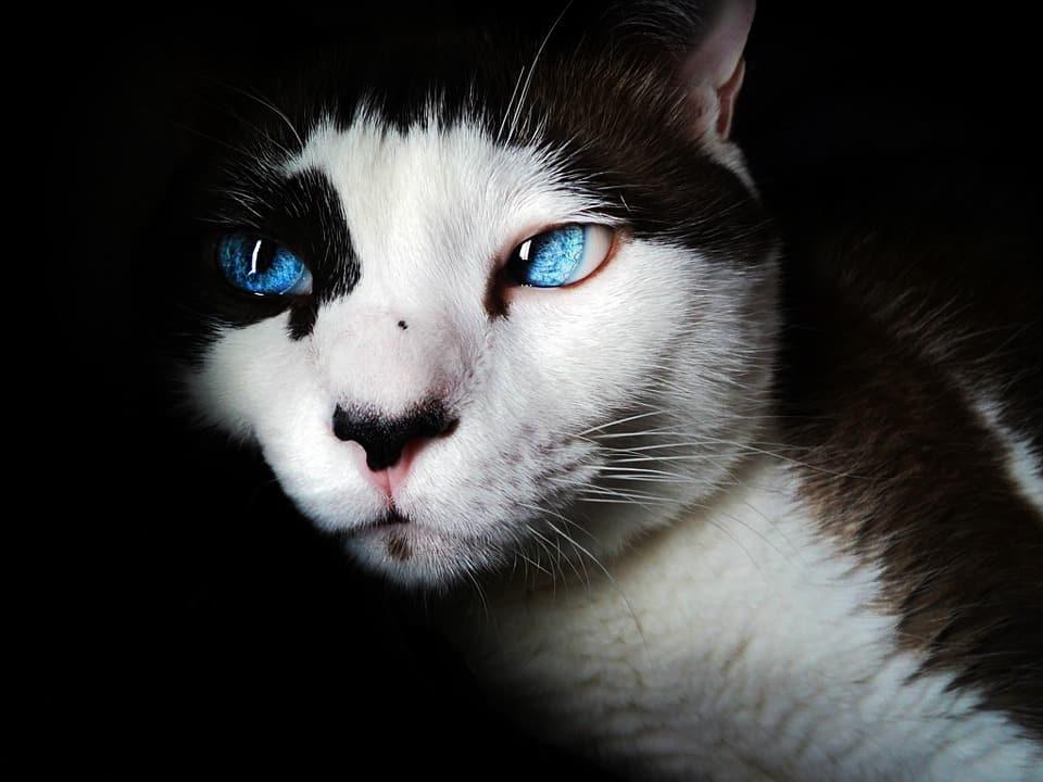 os gatos enxergam no escuro