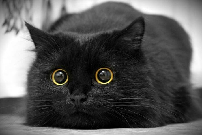 gato com pupilas grande