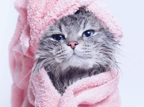 gato com toalha rosa em volta do corpo