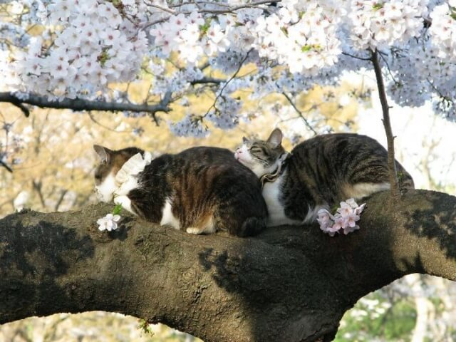 10 gatos exibindo suas habilidades de dormir nas árvores