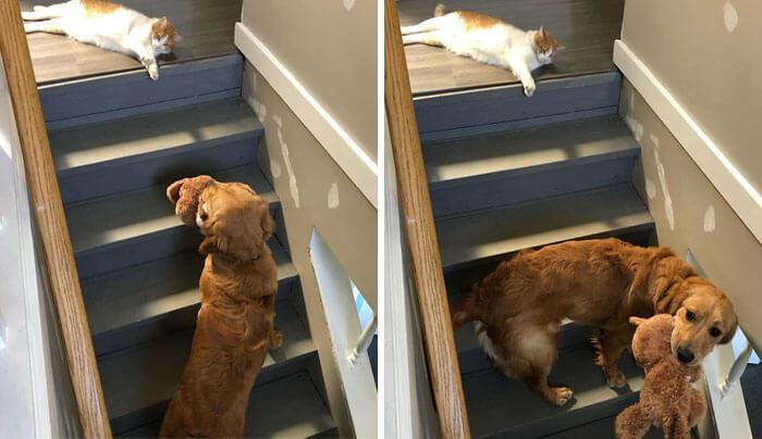 gato impedindo passagem do cachorro na escada