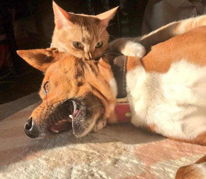 gato mordendo cachorro