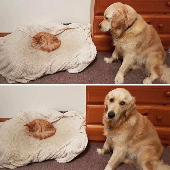 gato na cama do cachorro gatos sendo grandes chatos