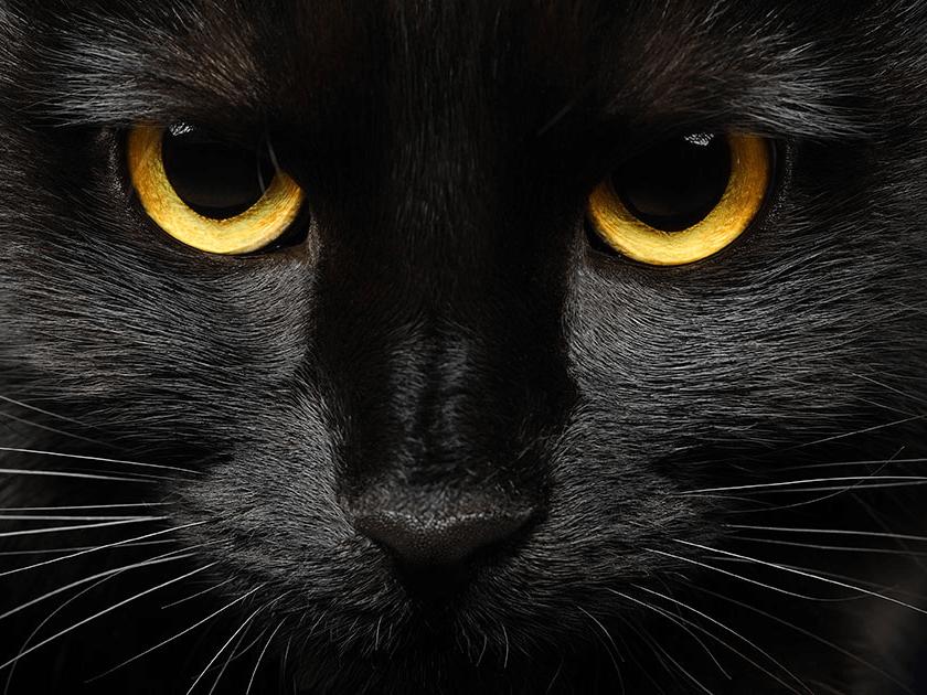 gato preto com olhos amarelos