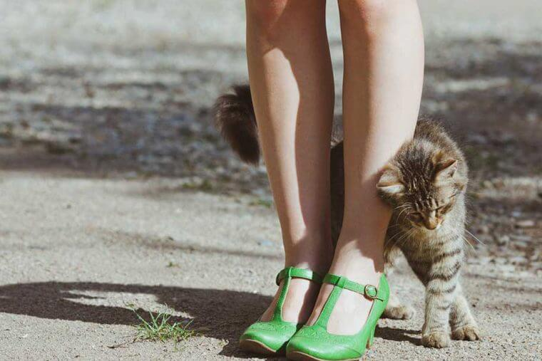 por que o gato se esfrega