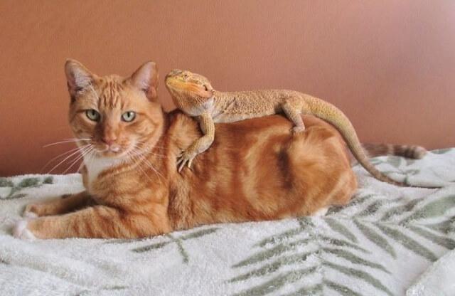 10 vezes em que gatos encontraram lagartos