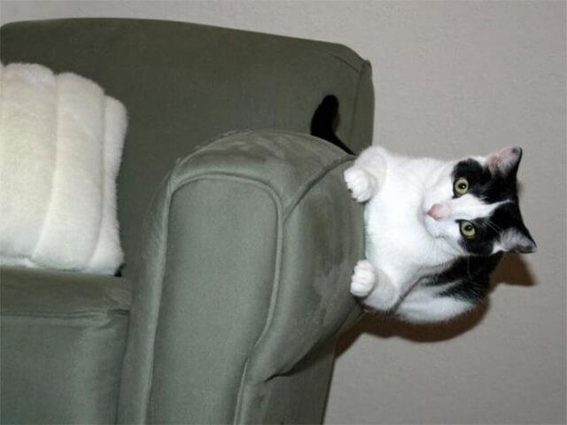 10 imagens de gatos que desafiaram as leis da física