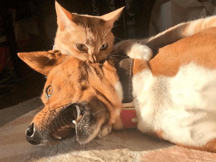 gatos sendo grandes chatos