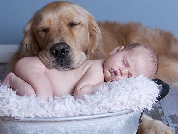melhores cachorros para crianças