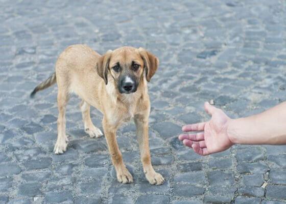 Como resgatar um cachorro de rua