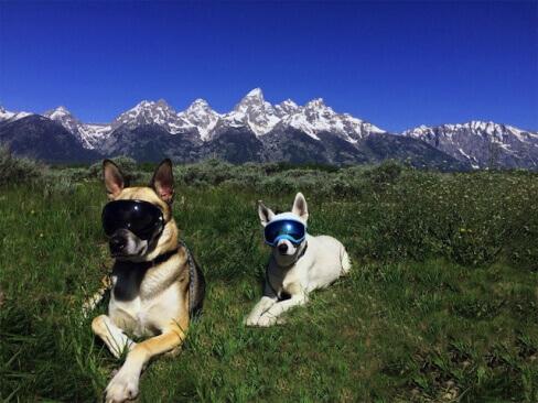 óculos para cães aventureiros