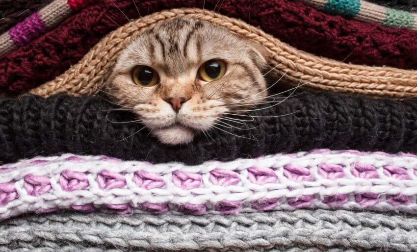 os gatos sentem frio