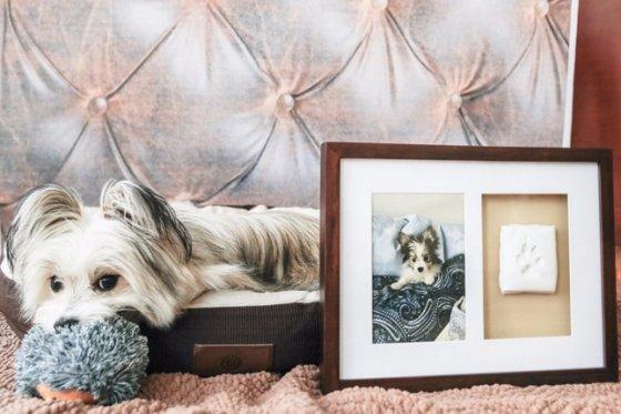 Como presentear um apaixonado por cães