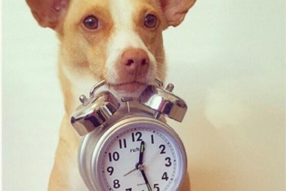 Conheça as 5 raças de cachorro que vivem mais