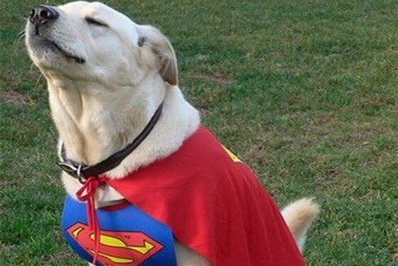 Conheça 3 raças de cães que possuem superpoderes