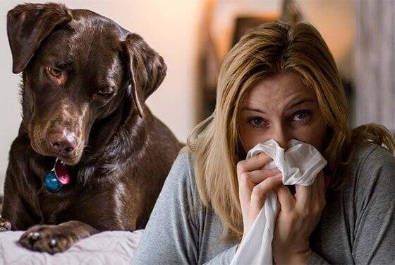 7 Raças de cães indicadas para quem tem alergia a cachorro