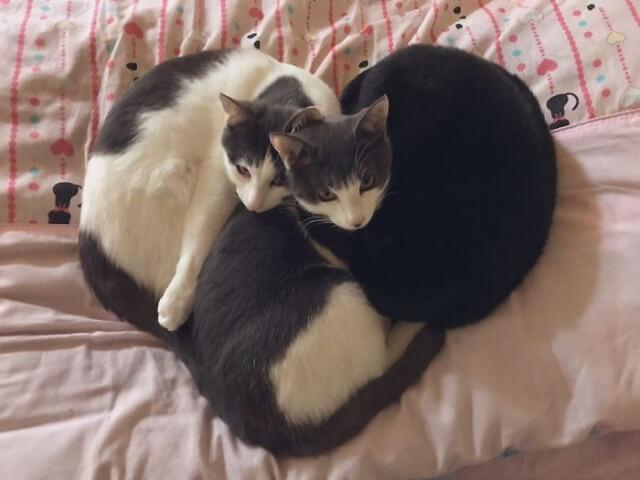 10 vezes em que pessoas fotografaram seus gatos dormindo em posições estranhas