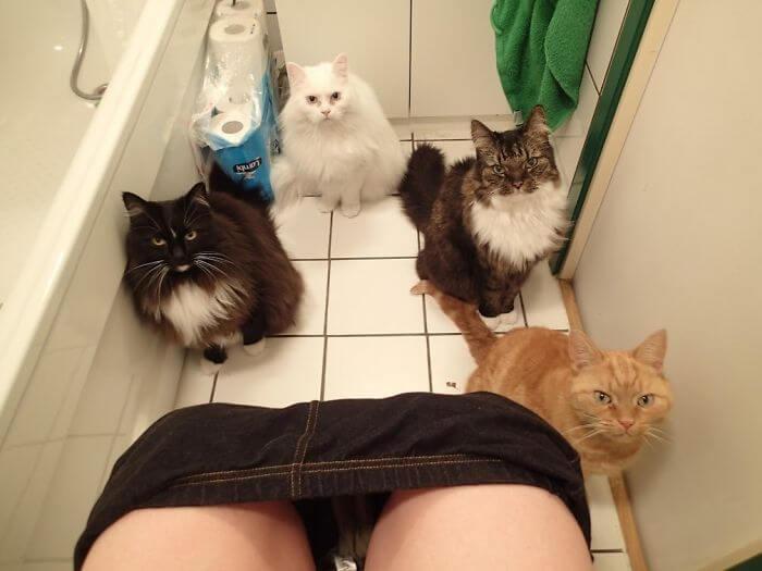 gatos no banheiro com dono